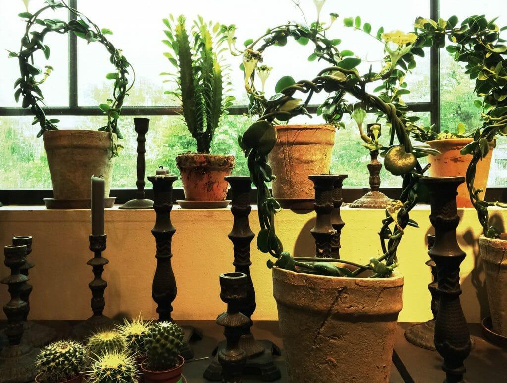 Zimmerpflanzen machen den Raum wohnlich
