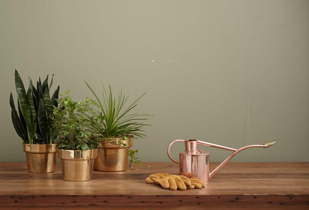 Zimmerpflanzen Galerie1