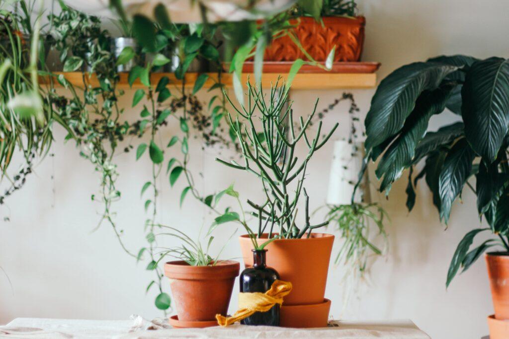 Zimmerpflanzen Galerie2