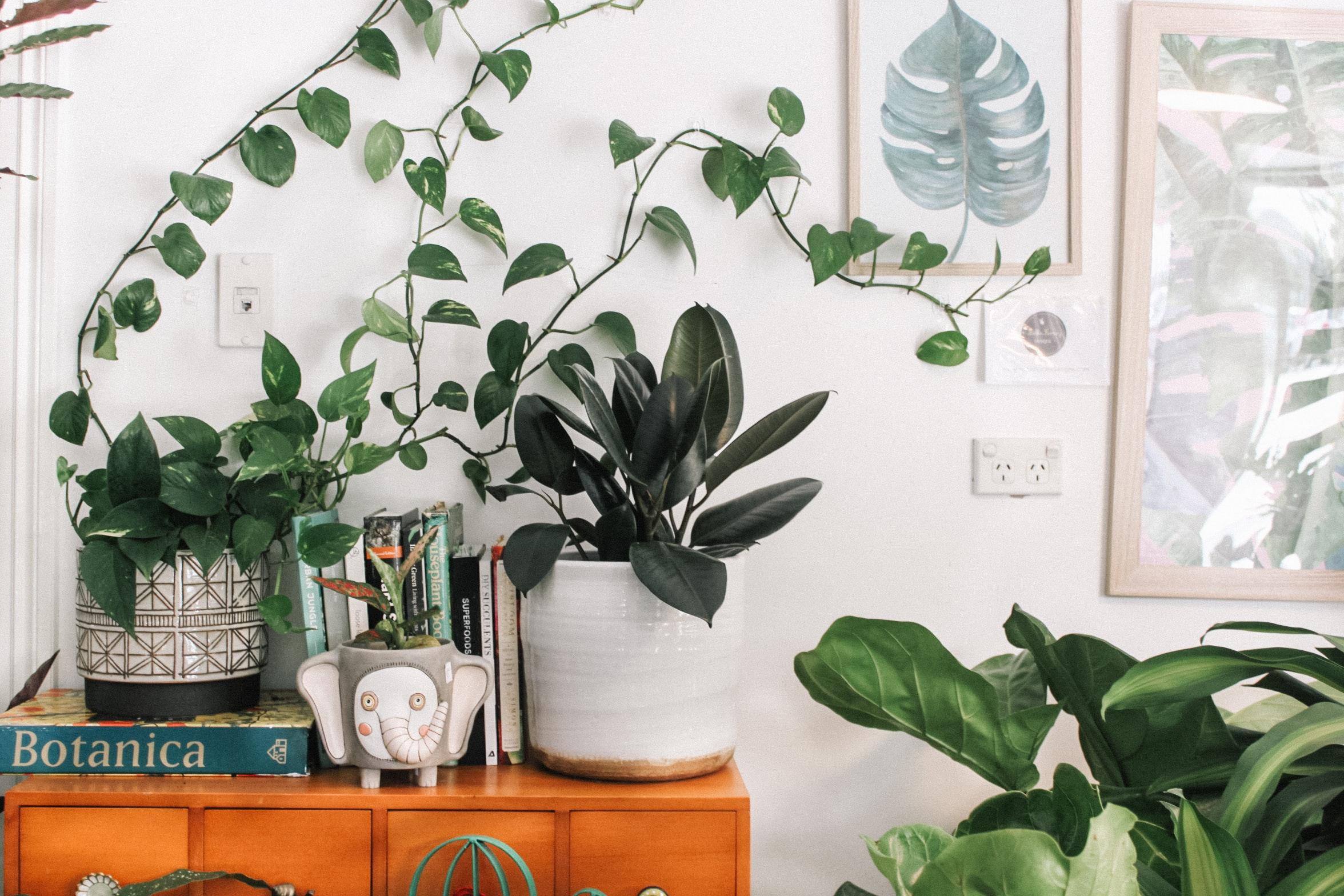 Zimmerpflanzen Vorschau