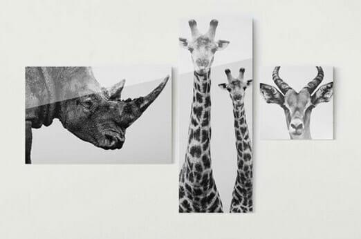 Bilderwelten Glasbild Safari
