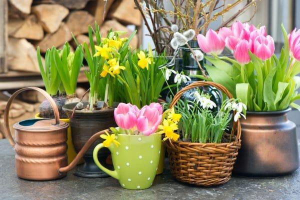 Frühlingsdeko Vorschau
