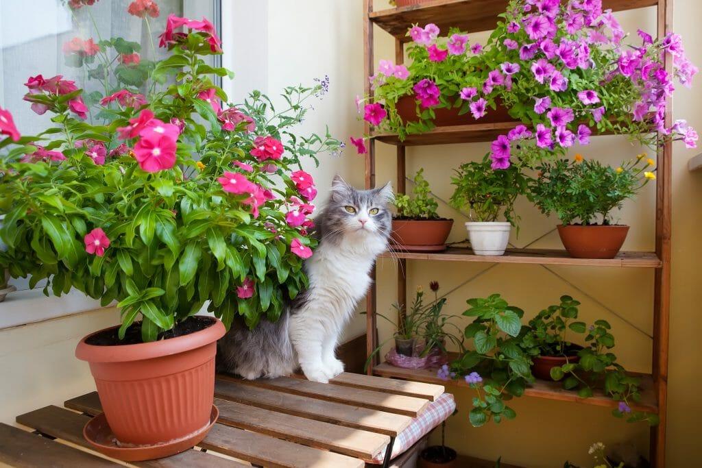 Blumenkästen Galerie 1