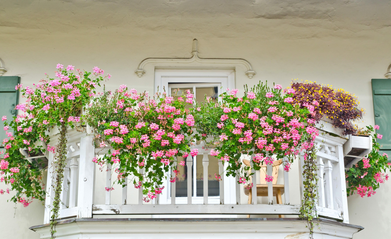 Blumenkästen Vorschau 7Roomz