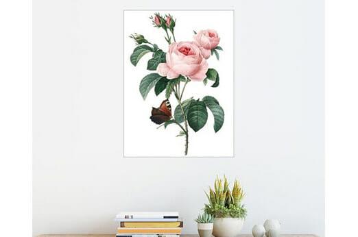 Posterlounge Wandbild Rose