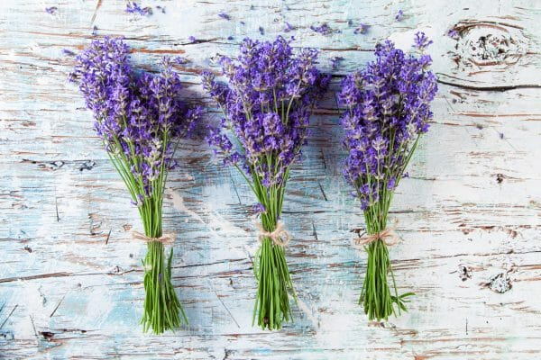 Lavendel Vorschau
