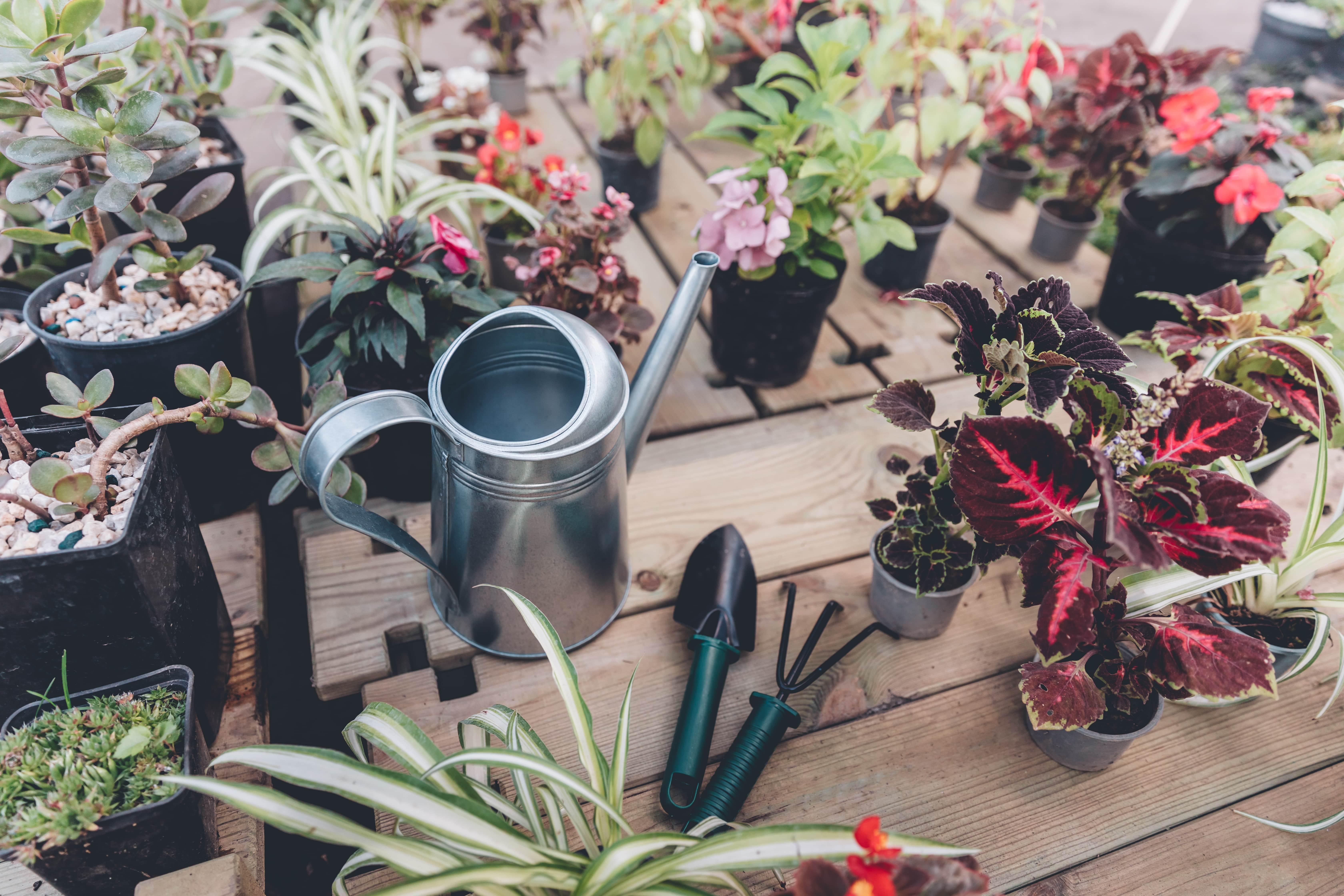 Urlaubsratgeber für Pflanzen Galerie 3