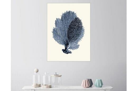 Posterlounge Wandbild Blaue Koralle