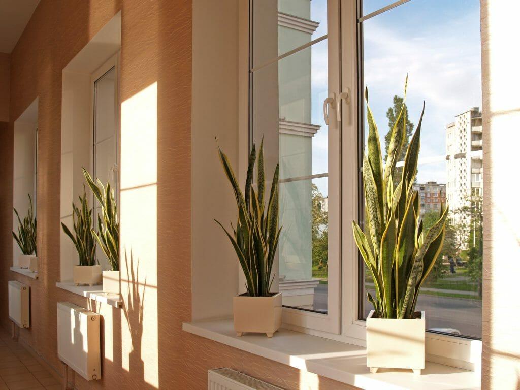 Sind Pflanzen im Schlafzimmer gesund? - 7ROOMZ