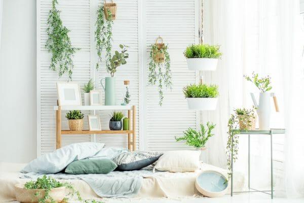Pflanzen im Schlafzimmer Vorschau