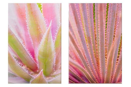 Leinwand Blushed Tropics 2-er Set rosa