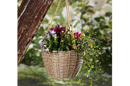 Blumenampel Jasmin rattan braun