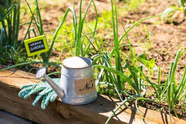 Urban Gardening Vorschau