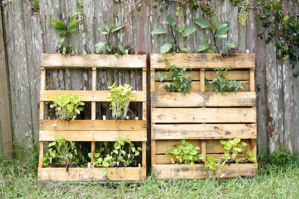 Urban Gardening Galerie 2