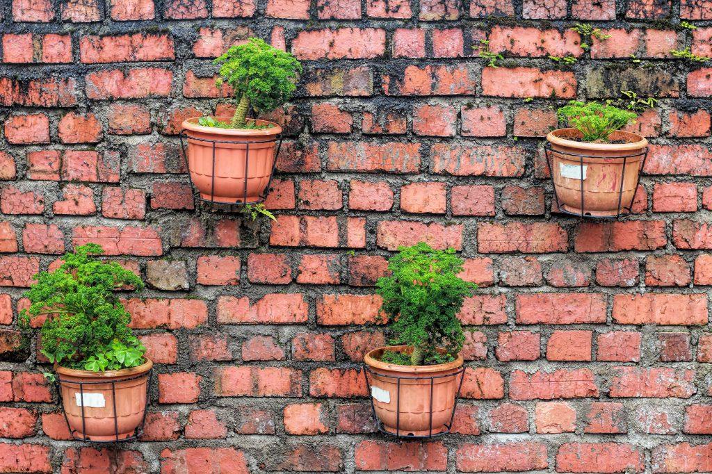 Urban Gardening Galerie 1