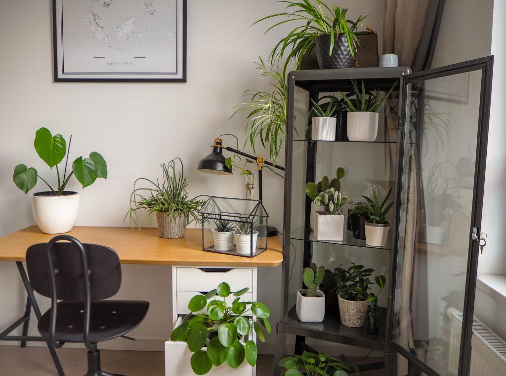 Indoor Garten Galerie 2