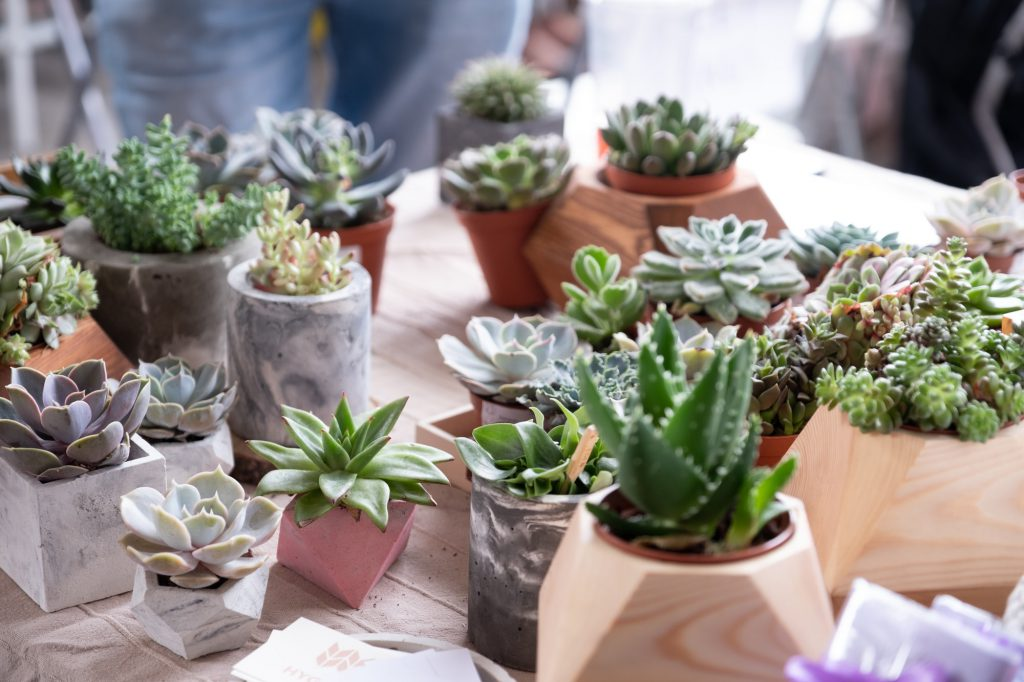 Indoor Garten Vorschau