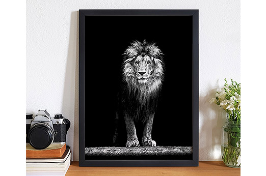 Bild Beautiful Lion