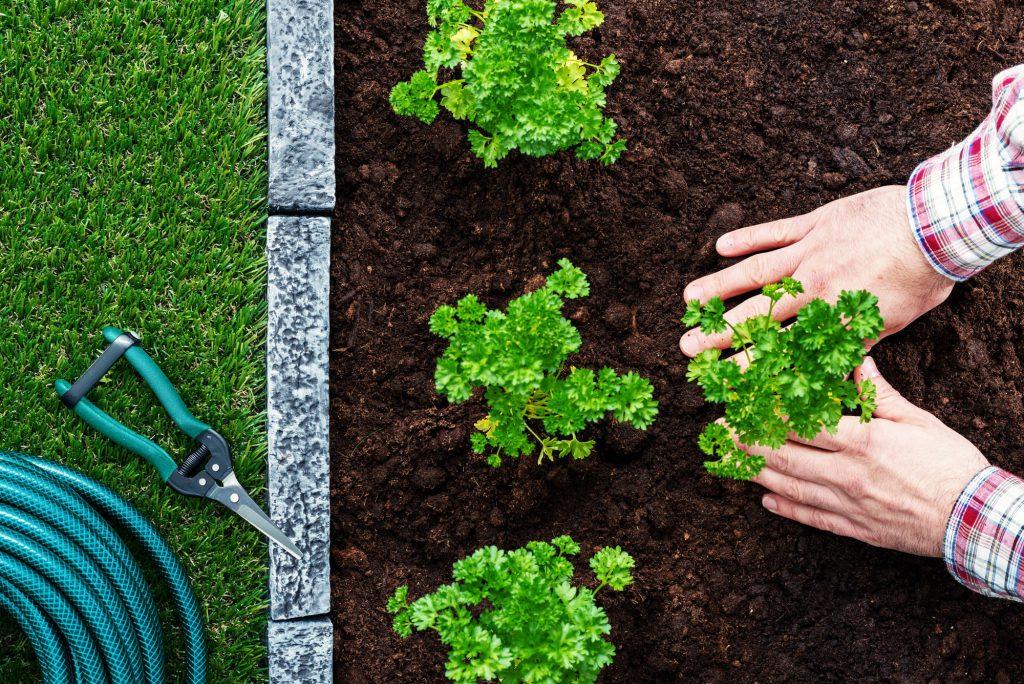 Hände pflanzen Kräuter ein
