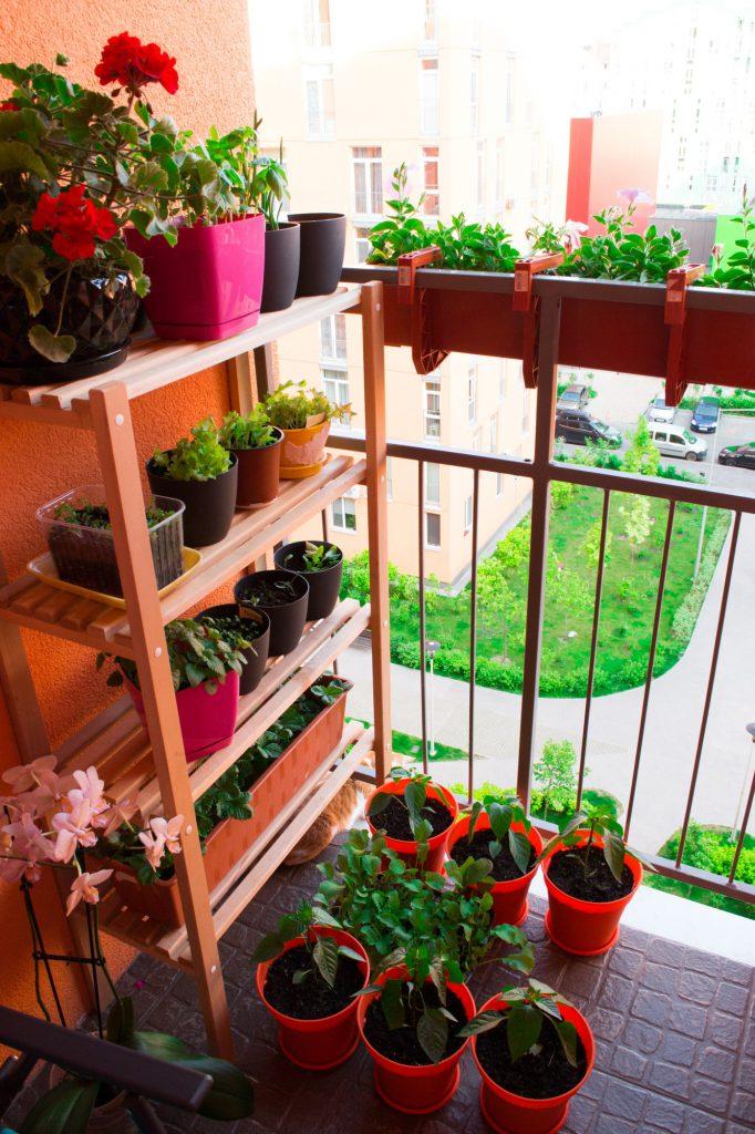 Pflanzenregal auf dem Mini-Balkon