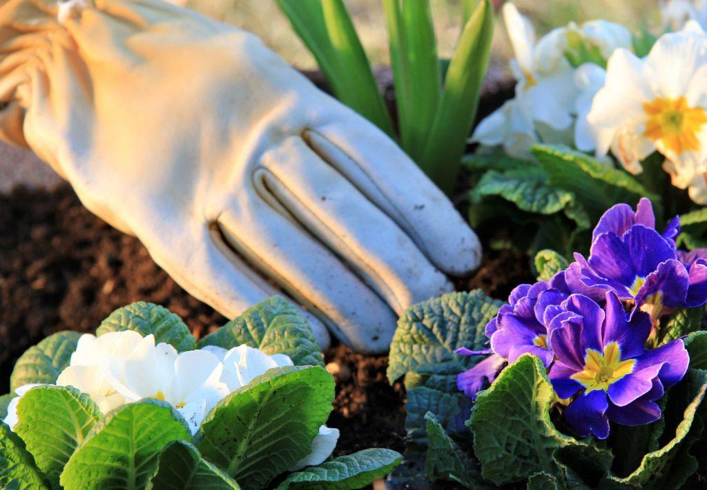 Hand pflanzt Pflanzen im Frühling