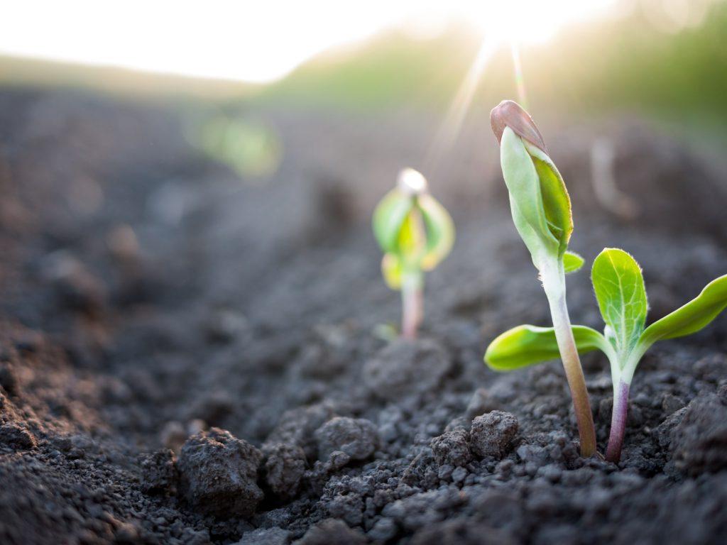 Pflanzen im Frühling wachsen