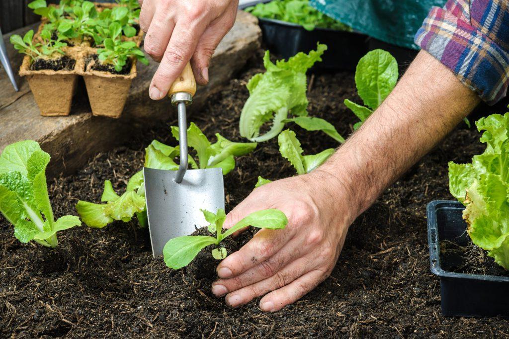 Setzlinge werden für Pflanzen im Frühling gesät