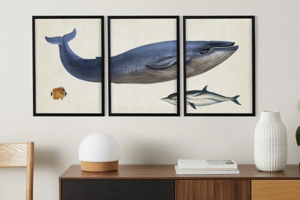 3 x Vintage Triptych Whale Illustration from the Natural History Museum, gerahmte Kunstdrucke (A3), Mehrfarbig und Schwarz