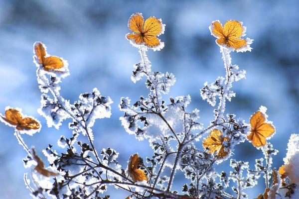 Winterharte Blumen Vorschau