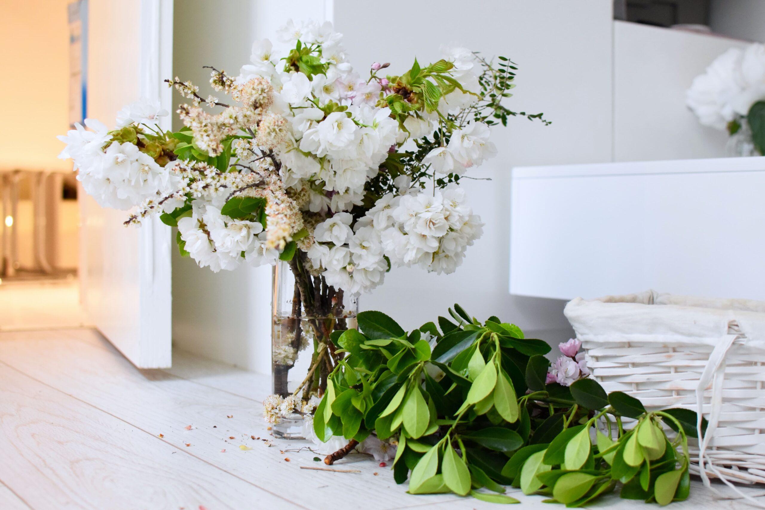 5 Typische Frühlings pflanzen Vorschau