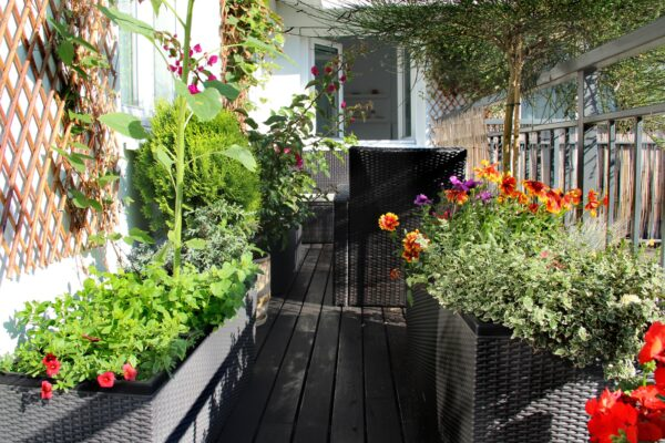 Frühlingsblumen für den Balkon Vorschau
