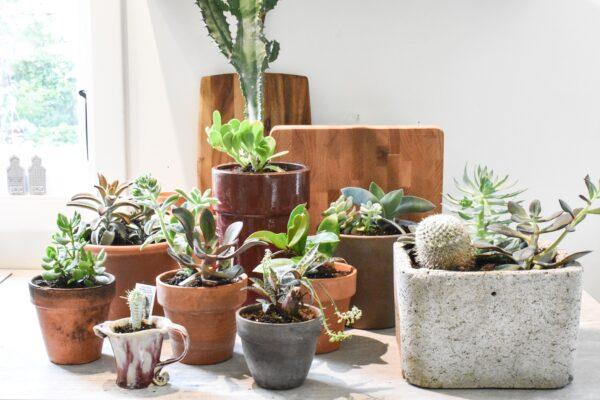 Pflanzen ohne Gruenen Daumen Vorschau