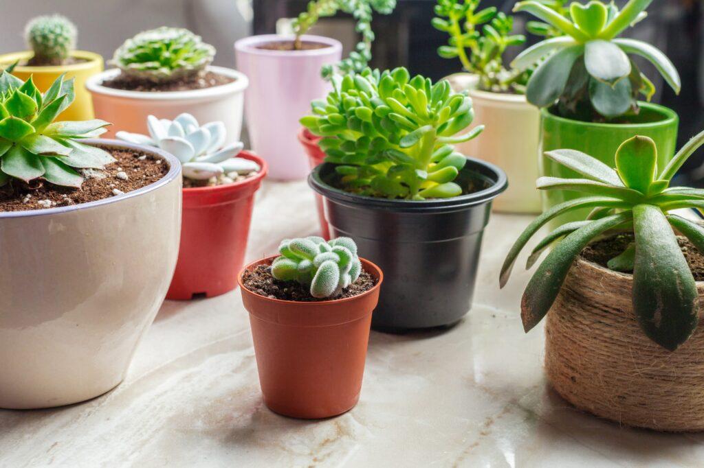 Pflanzen retten Galerie1