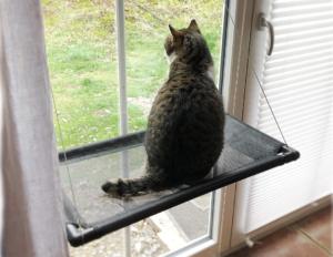 Fenster Katzenhängematte amazon