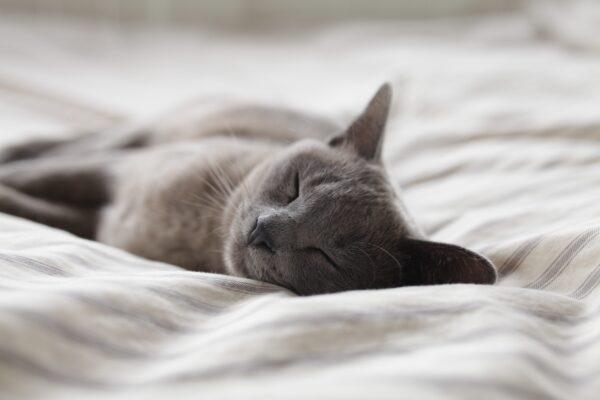 Guter Schlaf Vorschau