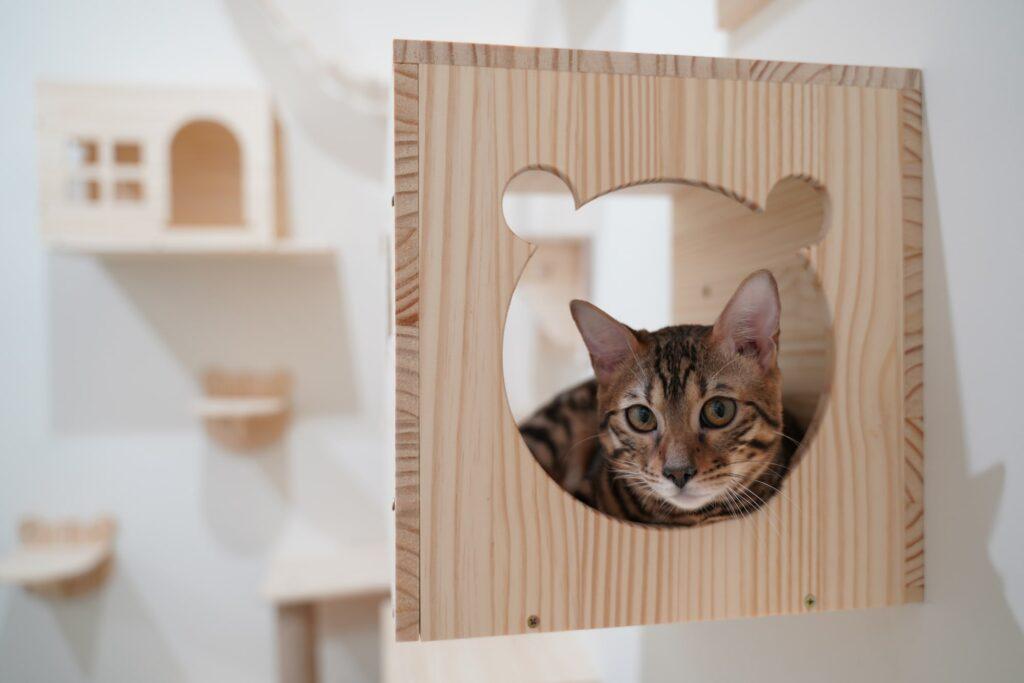 Katzen Accessoires Galerie1