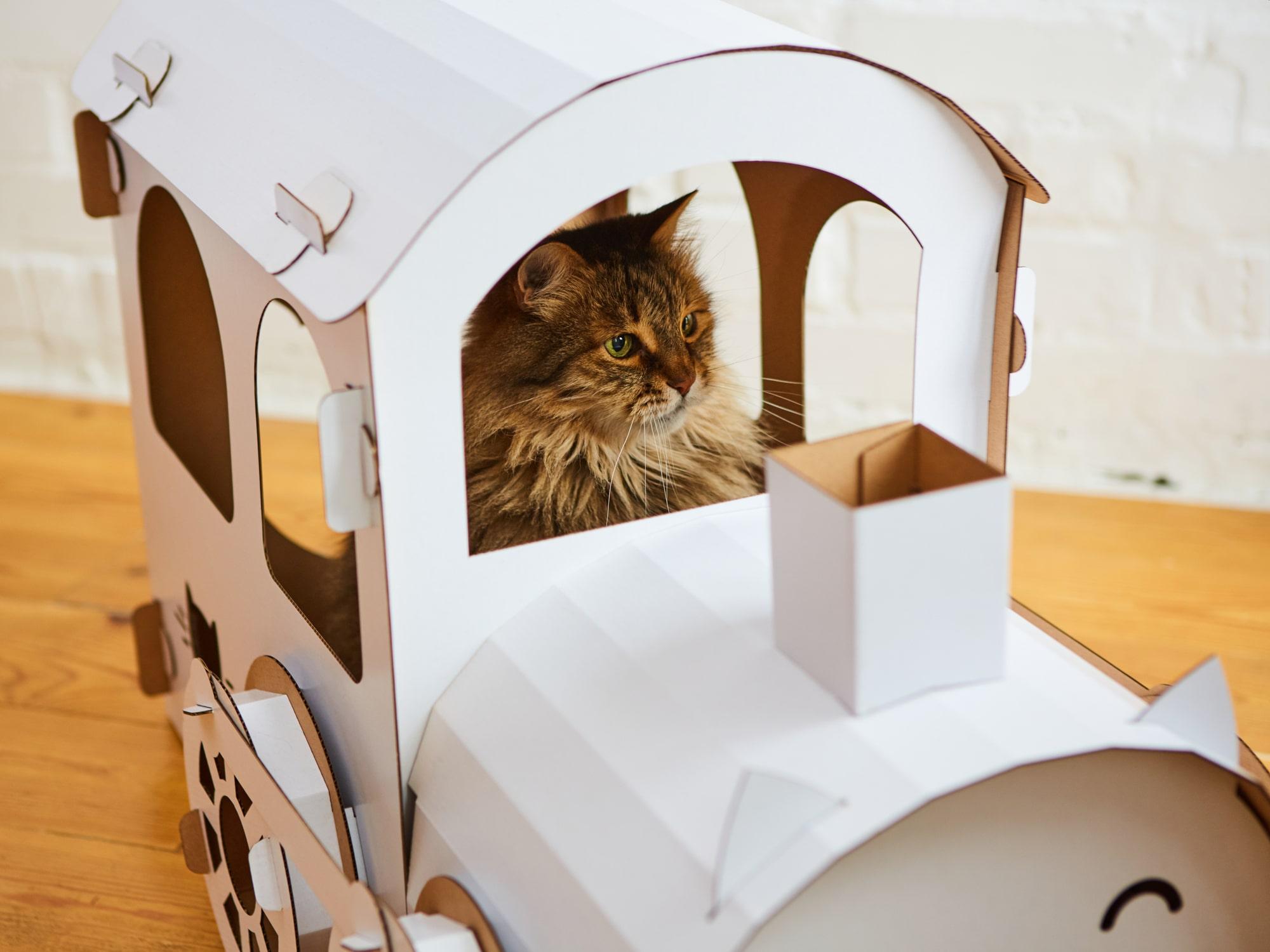 Katzen Accessoires Vorschau