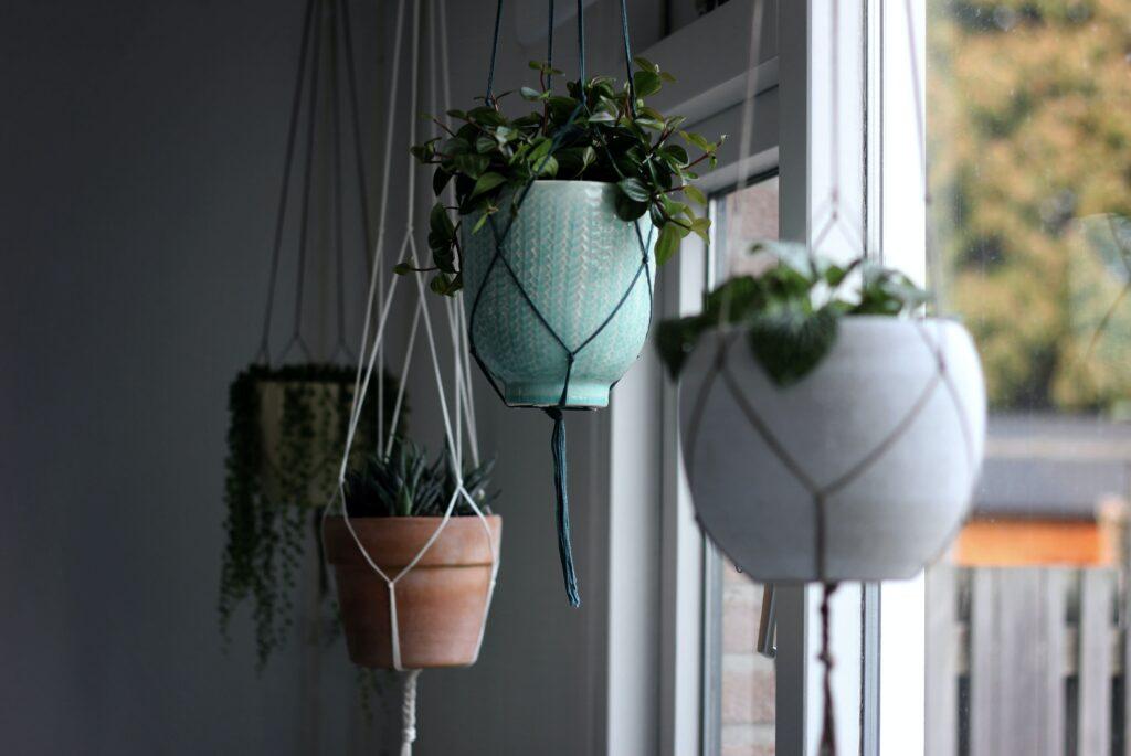 Hängepflanzen Galerie2