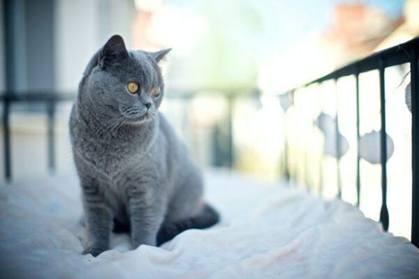 Katzenbalkon Vorschau