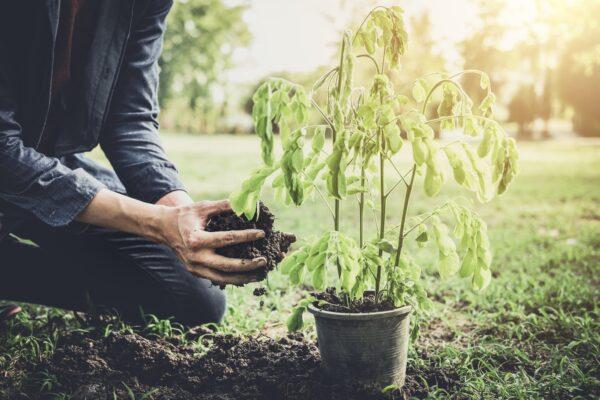 Nachhaltig Gaertnern Vorschau