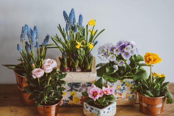 Pflanzenkübel Vorschau