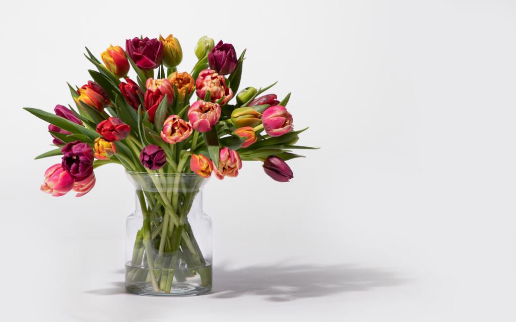 480_Tulpen-Flower-Bomb-30-Stiele
