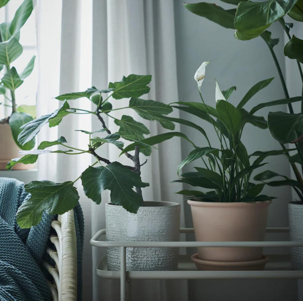Blumentopf mit Untersetzer, drinnen/draußen Terrakotta
