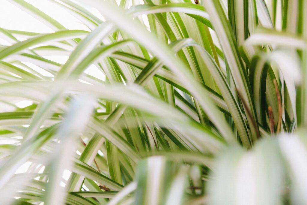 Pflanzen für dunkle räume galerie1