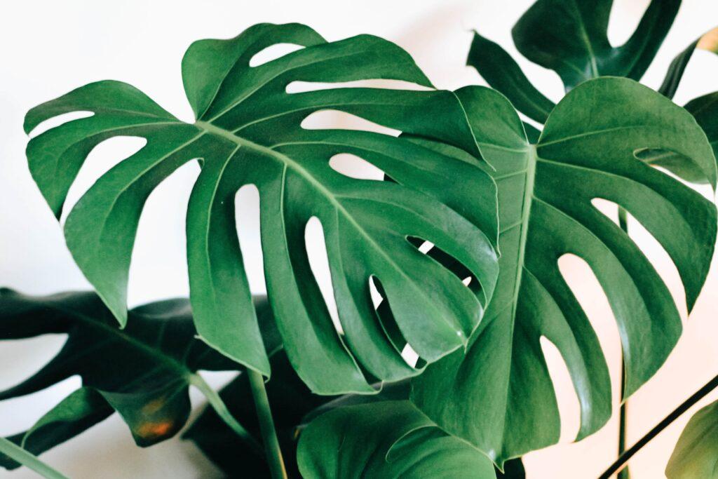 Pflanzen für dunkle räume galerie4