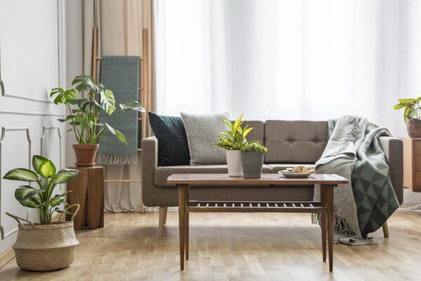 Wohnzimmer Pflanzen Vorschau