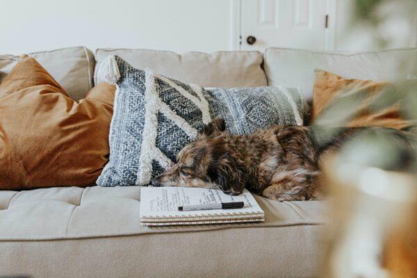 sofa zum einksucheln